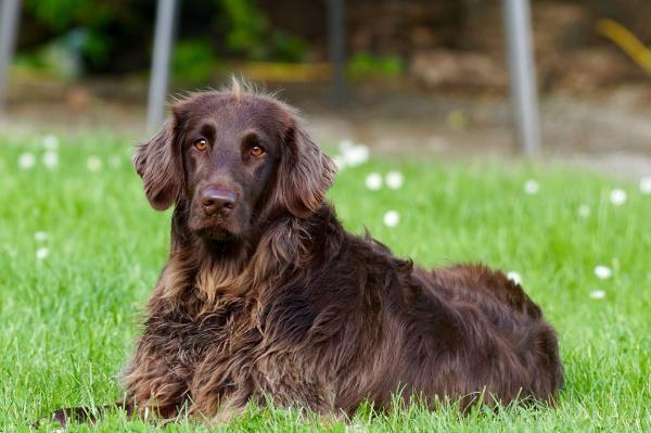 Ce rasă de câine se potriveşte zodiei tale (sursa foto: Pixabay)
