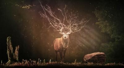 Animalul spiritual al zodiei tale (sursa foto: Pixabay)
